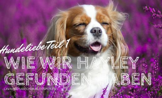 Hayley_Hundeliebe