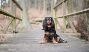 Darida freut sich über rücksichtsvolle Hundefreunde