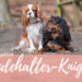 Der ultimative Hundehalter-Knigge